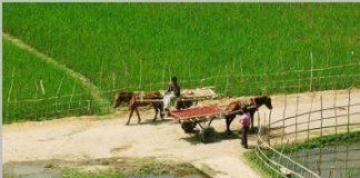 village-road
