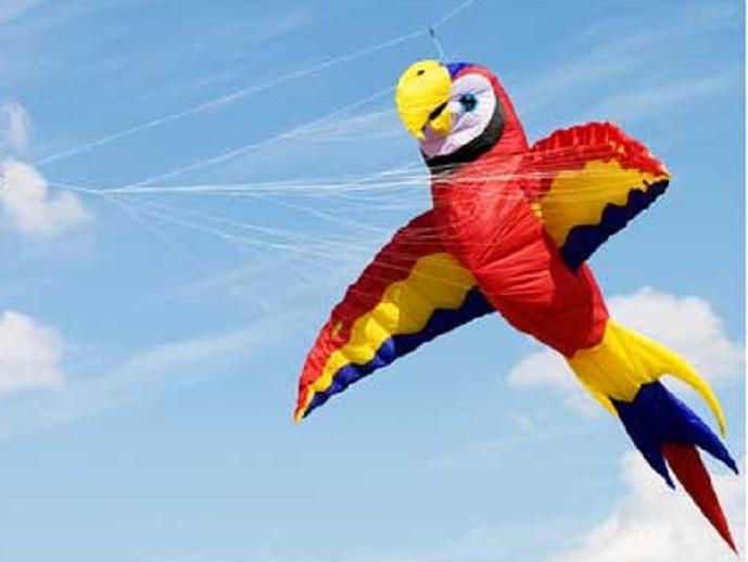 Bird-Kite-3