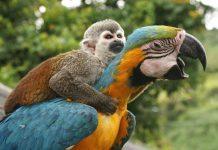 monkey-parrot
