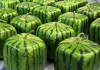 Watermelon-Square