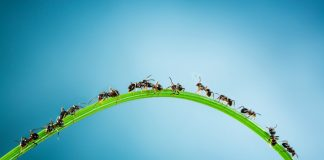 Ant-Traffic