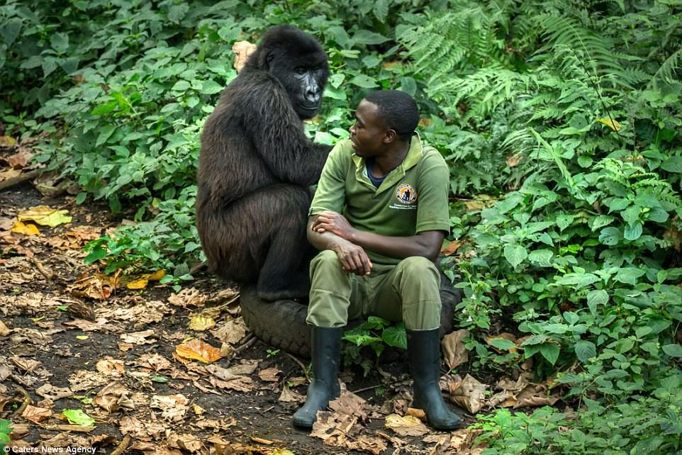 Gorilla & Man-1