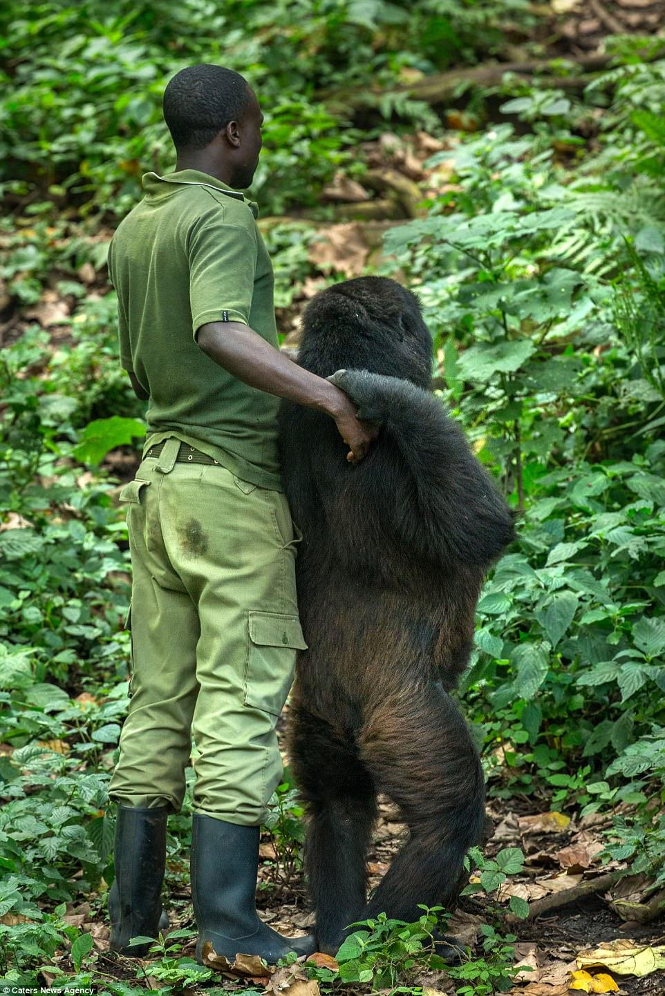 Gorilla & Man-2