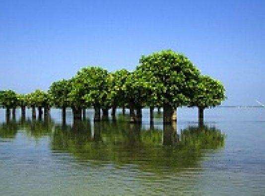 haor tree 2
